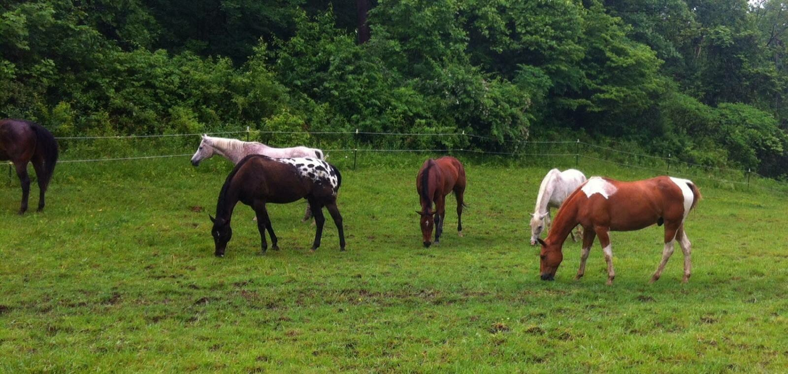White Horse Farm Kennel Hinckley Oh